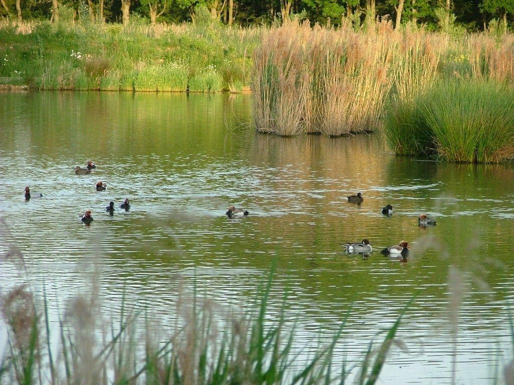 Sortie oiseaux de la dombes - Office du tourisme villars les dombes ...